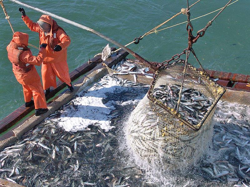 промышленное судно для ловли рыбы